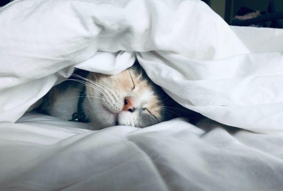 睡眠は脂肪消費に関係